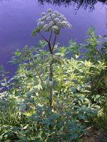 Eetbare vaste planten